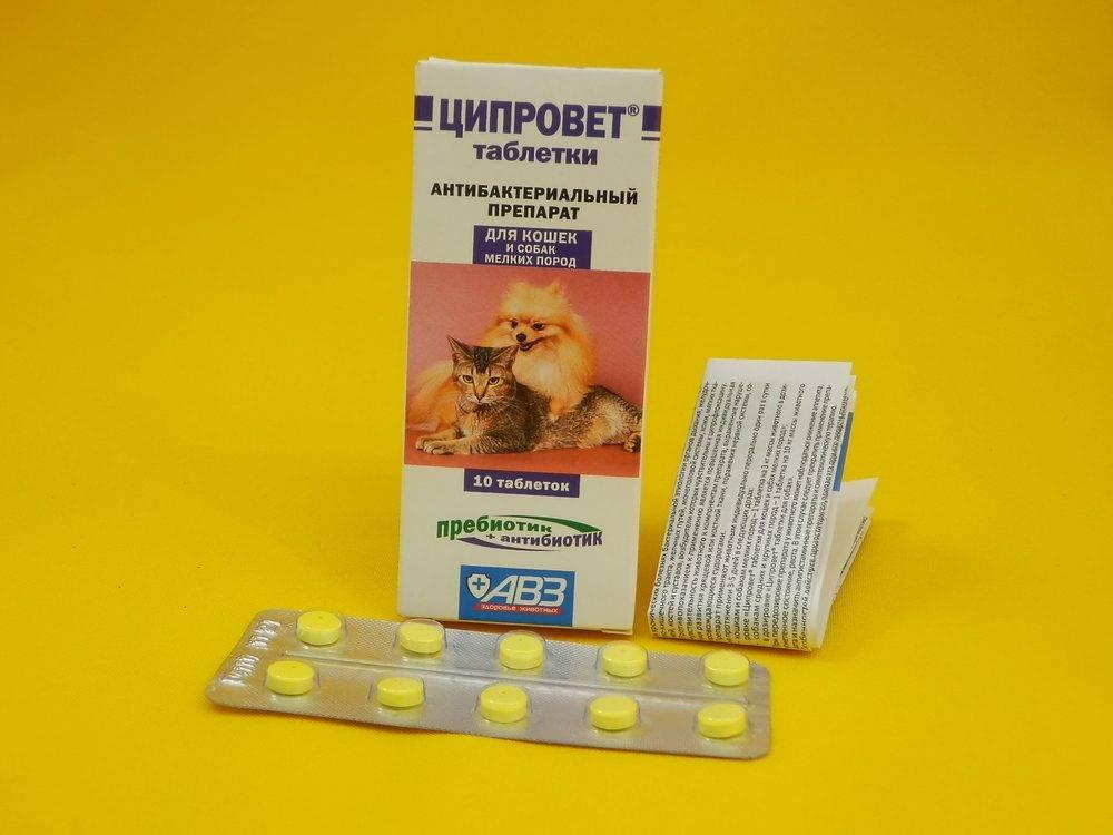 Ципровет — таблетки для собак