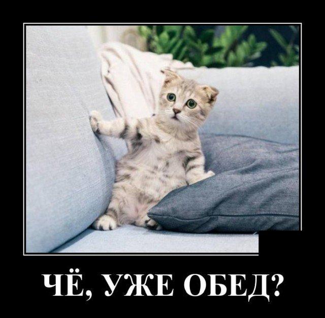 Цитаты про кошек и котов со смыслом