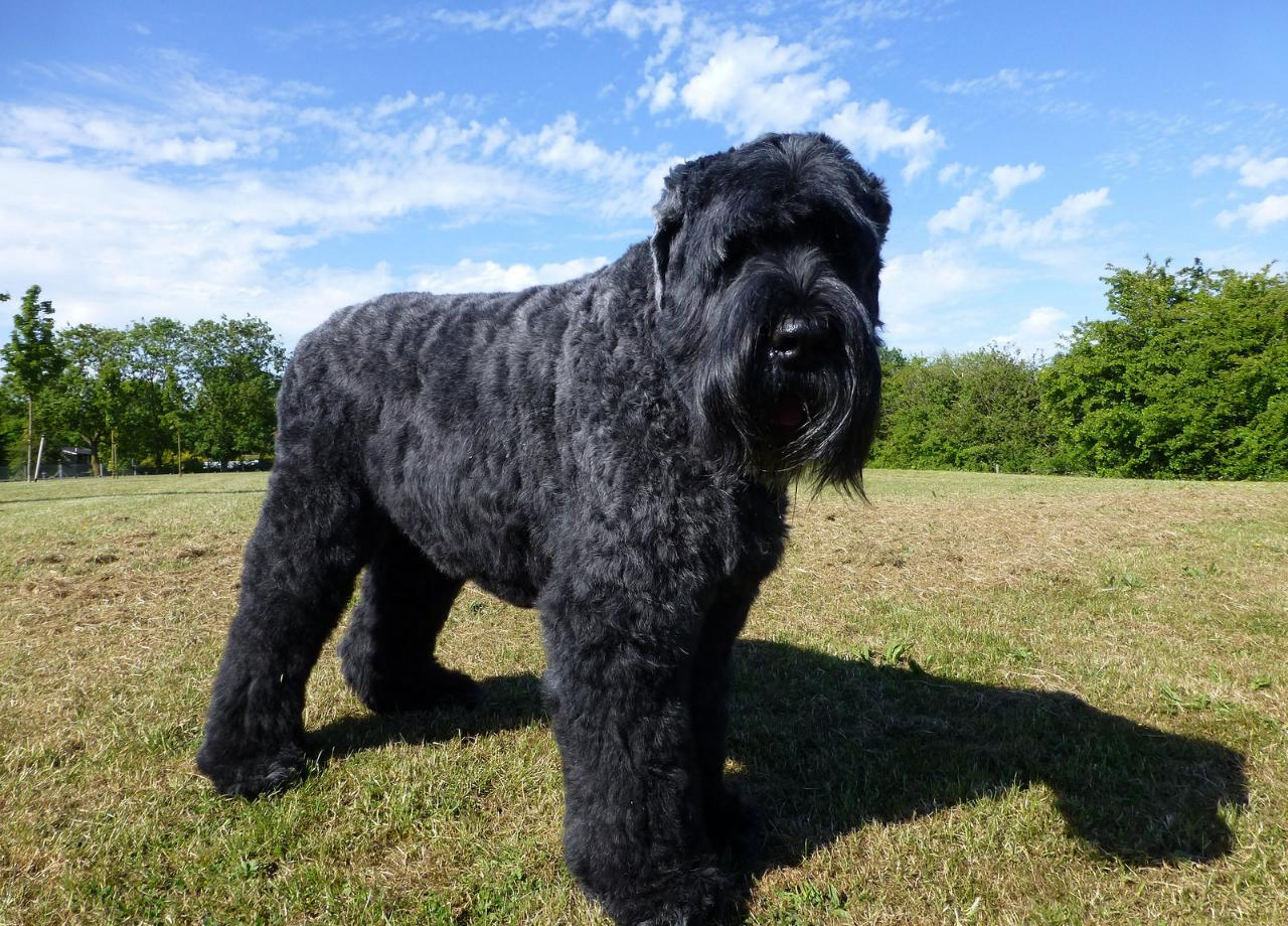 Какие породы собак были выведены в России