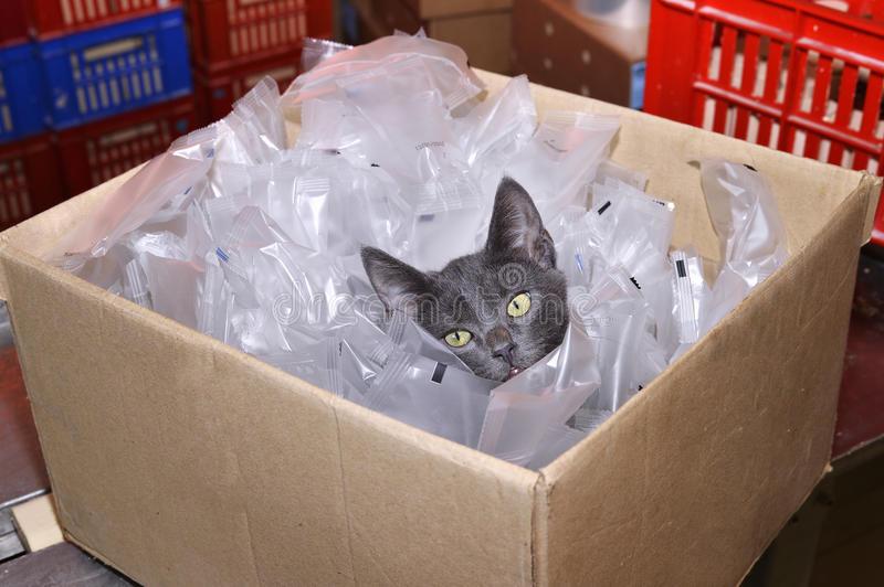 Почему кошки любят коробки и пакеты: почему залезают туда