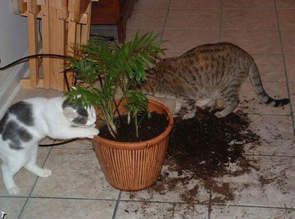 Лайфхаки для котиков: как сделать совместную жизнь легче и веселее