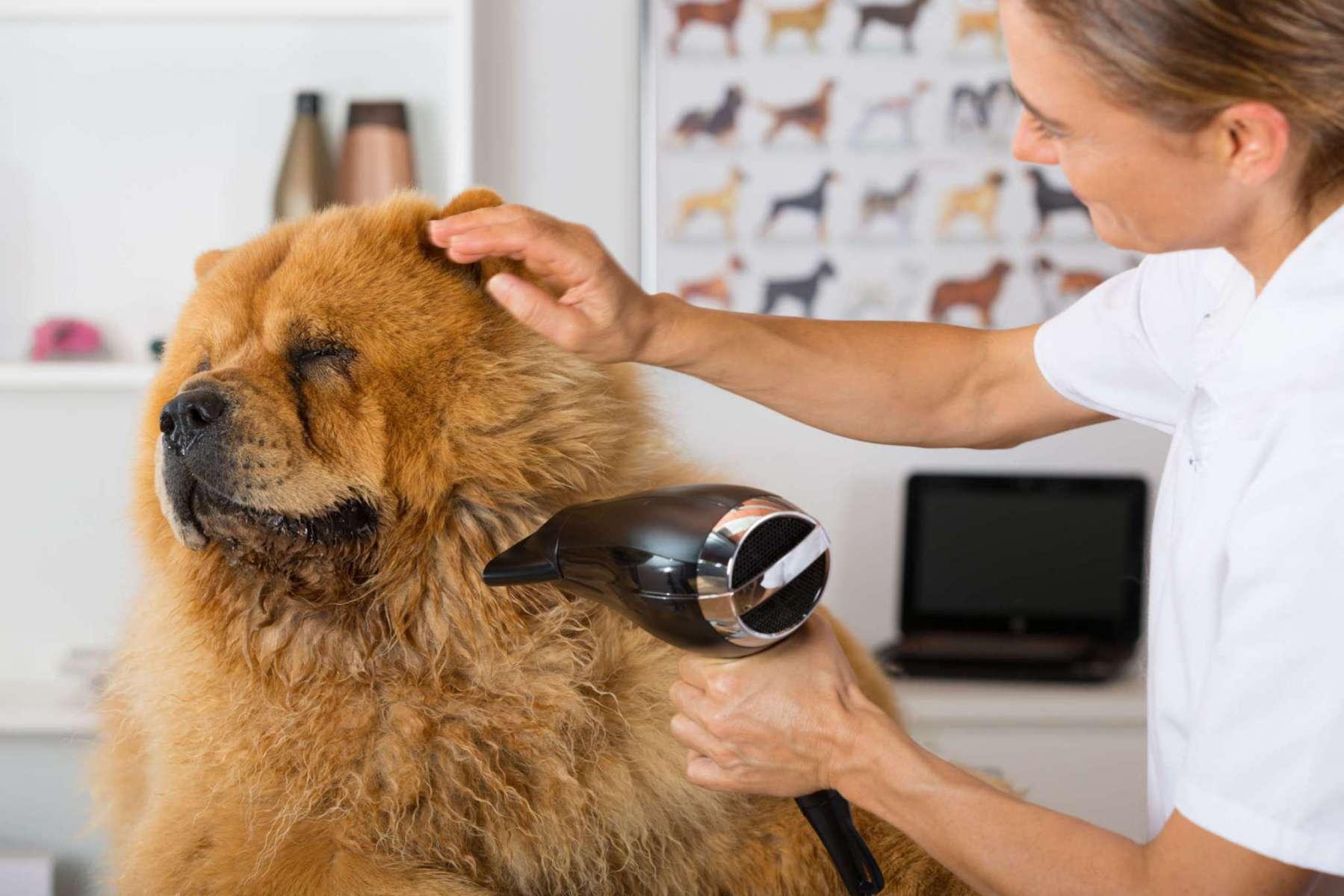 Как называется парикмахер для собак: профессия