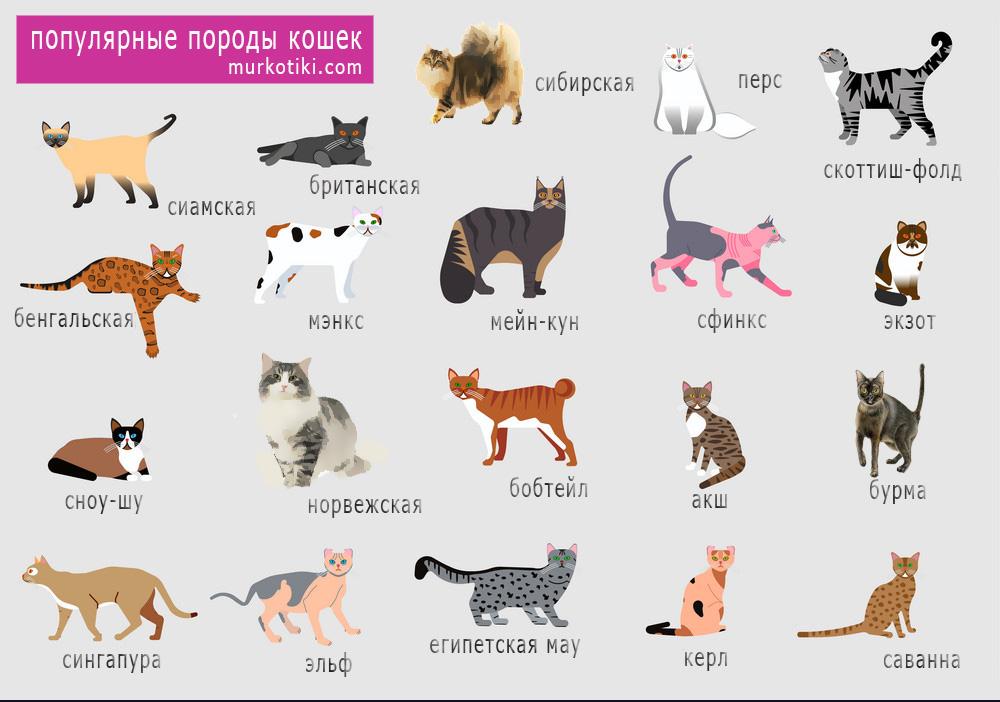 Породы кошек: разновидности и их описание