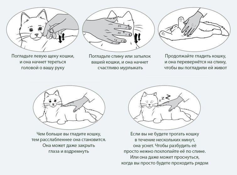 Кошка делает массаж лапками: что это значит