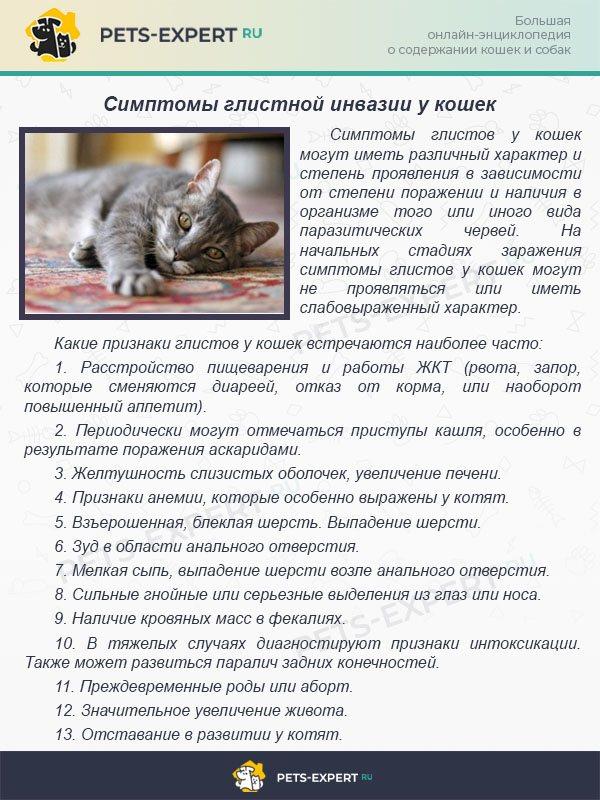 Энтерит у кошек: как лечить болезнь