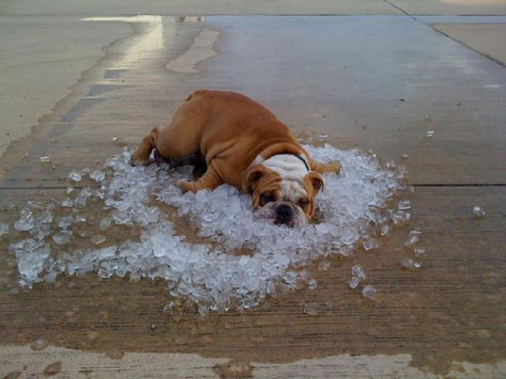 Скоро лето, жара, и животным придется не сладко…