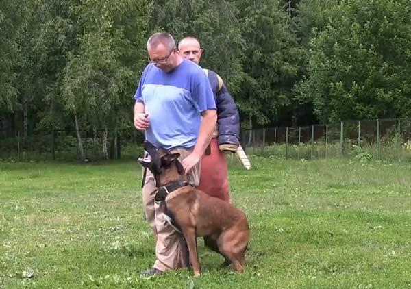 Как научить собаку команде «рядом» на поводке или без него