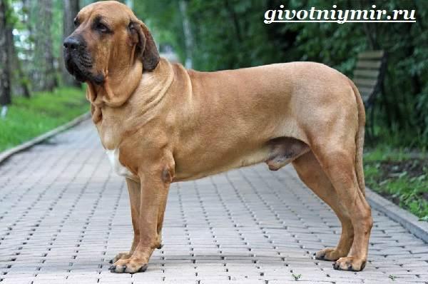 Фила бразилейро: гордый, грозный и нежный гигант