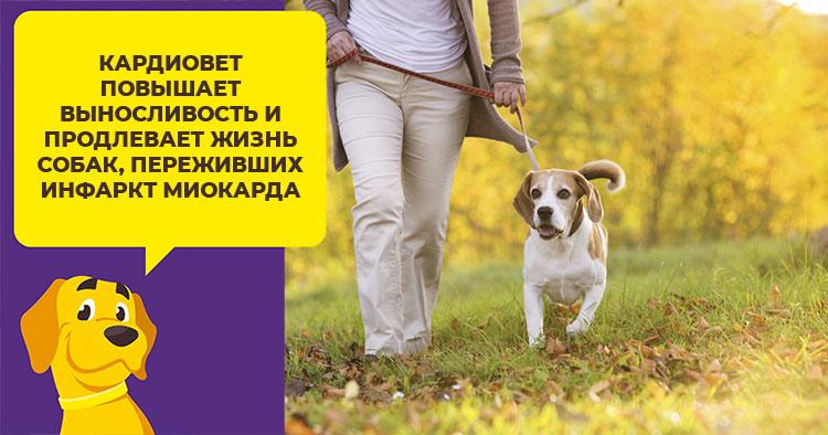 Как максимально продлить жизнь собаки