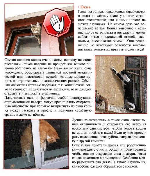 Типичные случаи проблем с кошками и котами дома