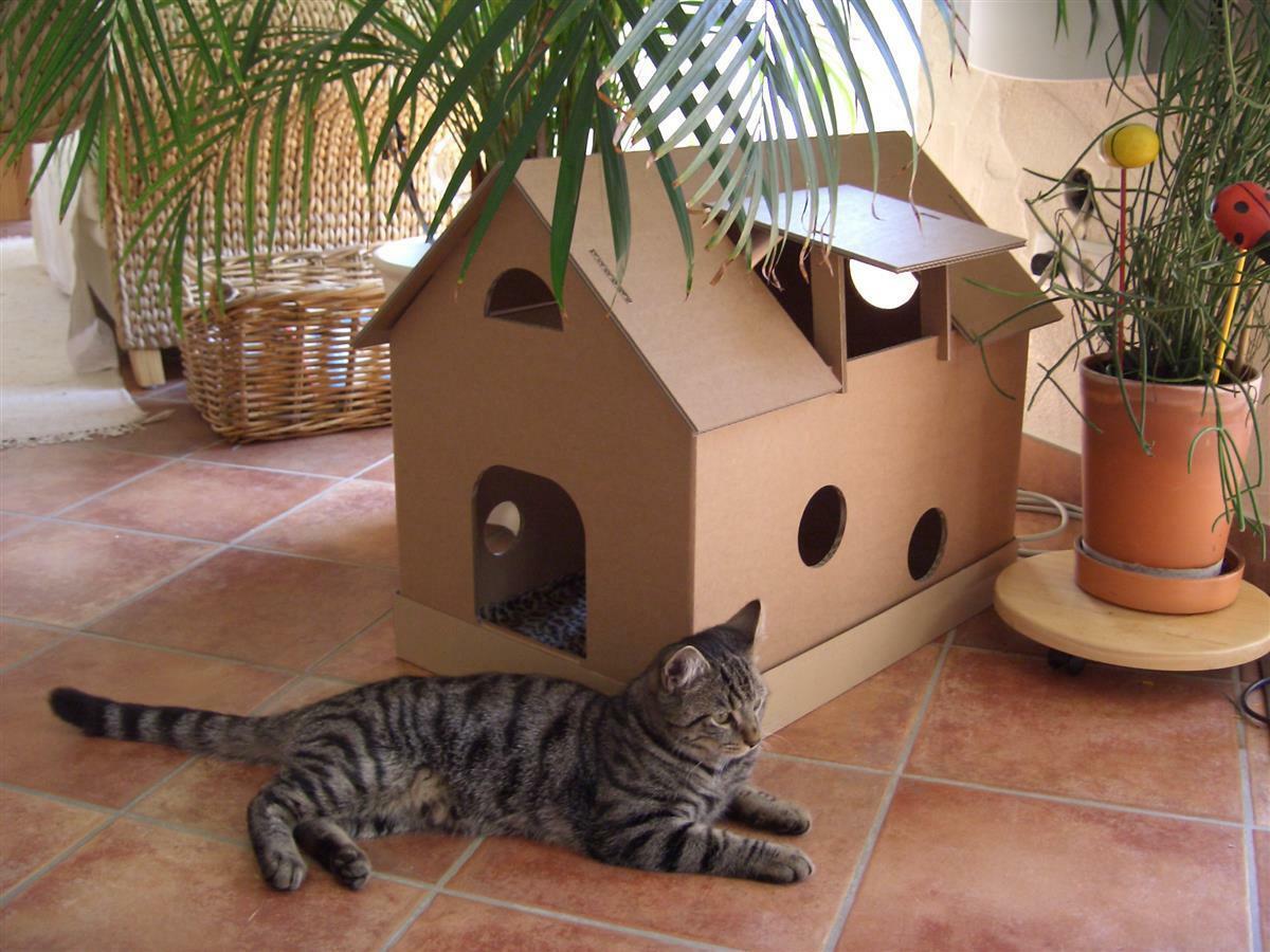 Нужен ли кошке домик