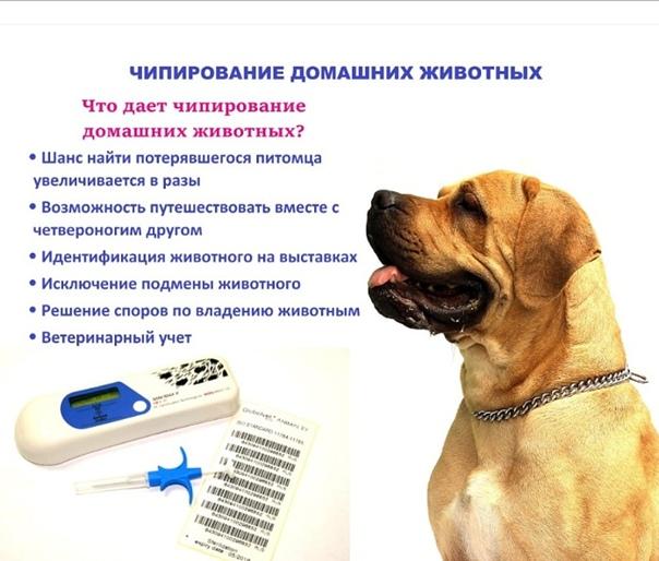 Чипирование собак: что это такое и зачем нужно