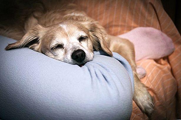 Собака писает на кровать: почему и как отучить