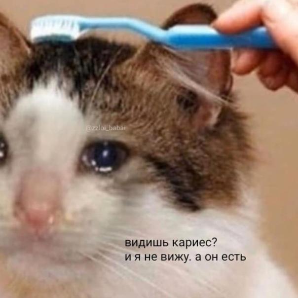 Кот плачет: могут ли рыдать и почему это происходит постоянно