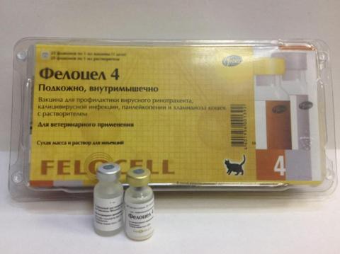 Фелоцел — вакцина для кошек и котов