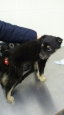 Защемление нерва у собаки: симптомы и лечение