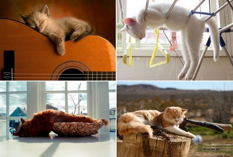 Нелепые позы, в которых спят кошки — так могут только они