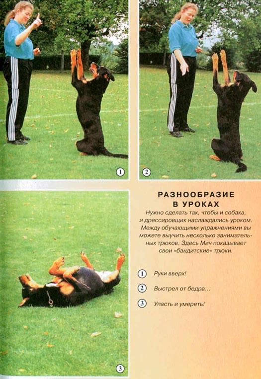 Как научить собаку команде «лежать» в домашних условиях