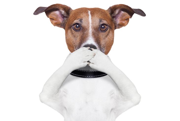 Какой запах не любят собаки, чтобы отпугнуть