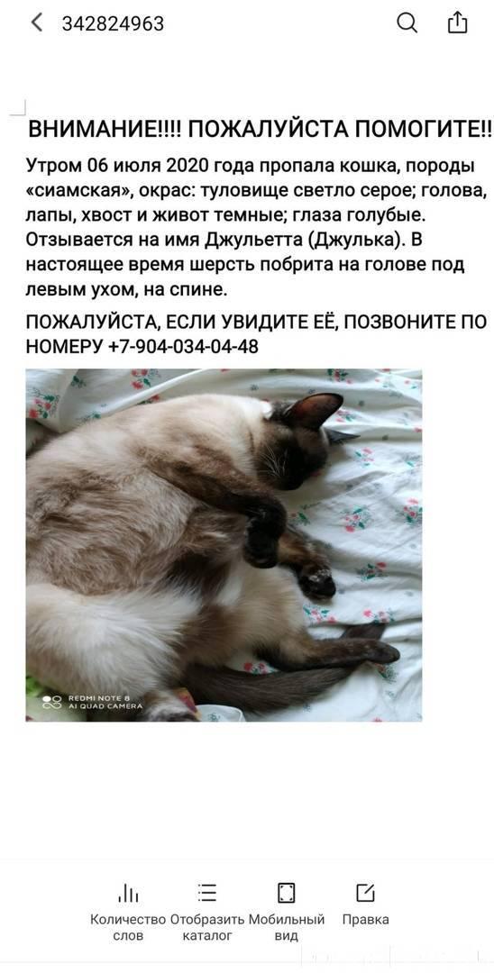 Что делать если пропала кошка или кот?