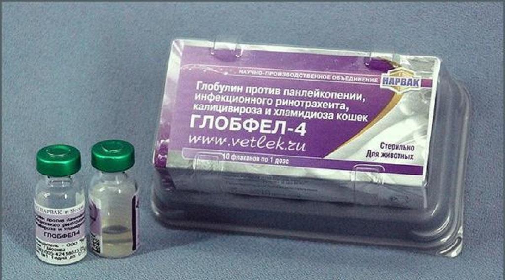 Глобфел-4 для кошек: защита питомца от серьёзных инфекций
