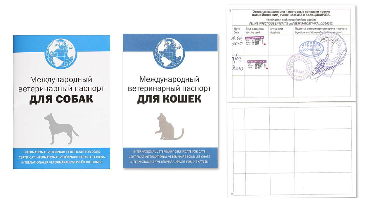 Ветеринарный паспорт для кошки — как получить и заполнить правильно