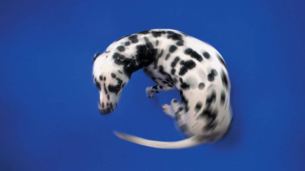 Почему собака бегает за своим хвостом и кусает его
