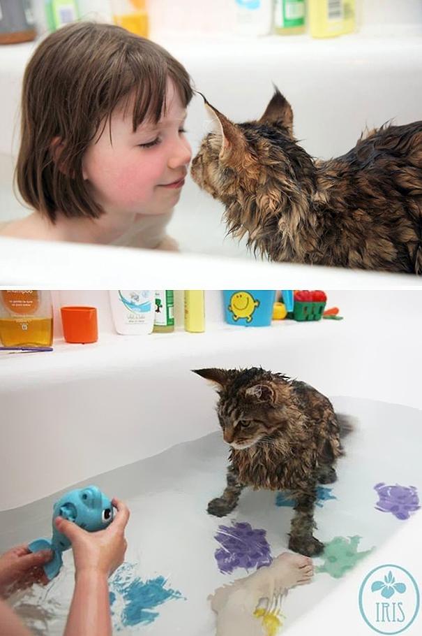 Почему кошки боятся воды — причины страха купания