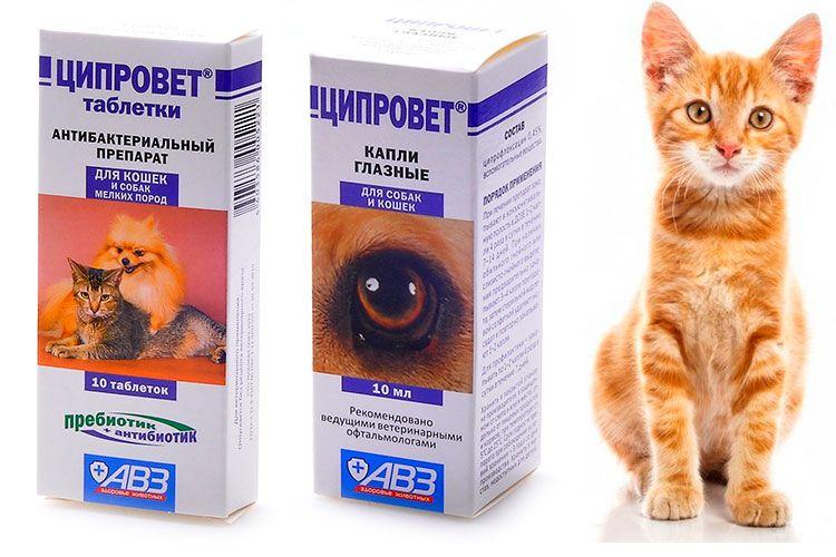 Ципровет для кошек