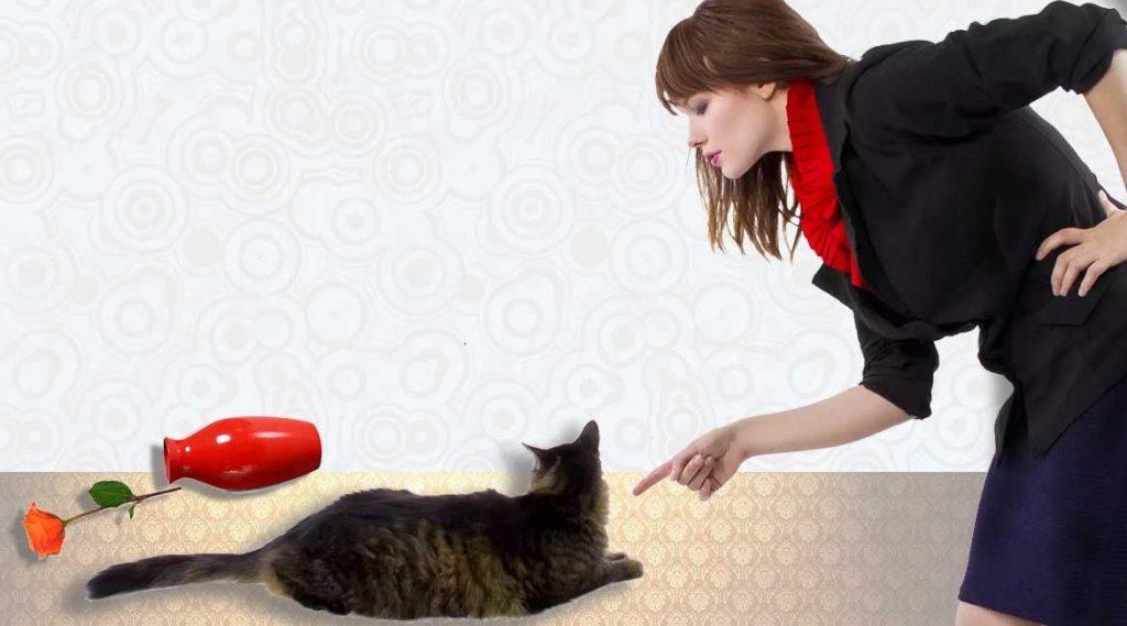 Как правильно наказывать кошку или кота?