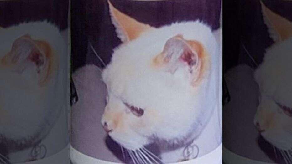 Что происходит с котом после смерти: куда уходит их душа