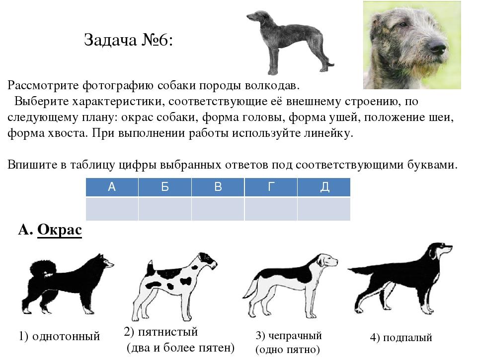 Породы собак: какую выбрать для себя по критериям