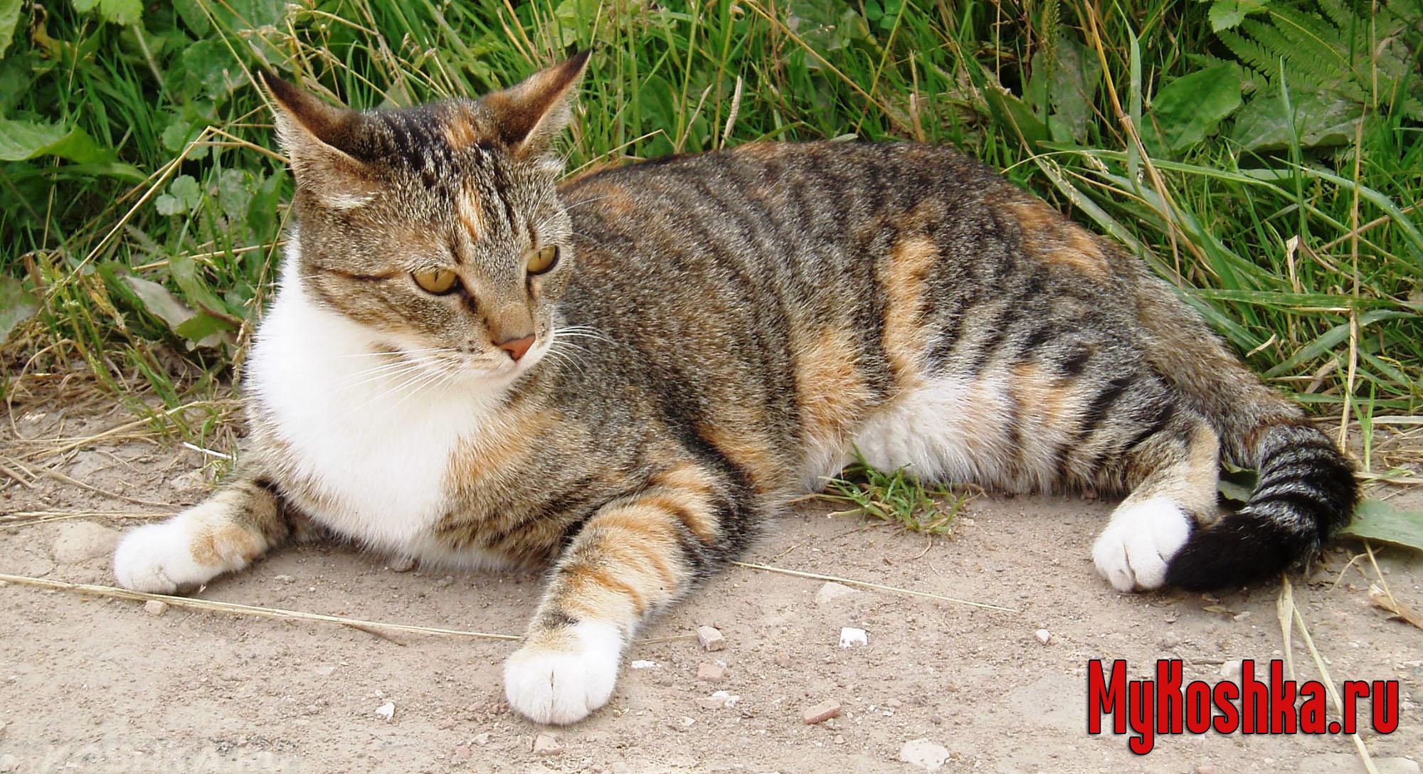 Как найти кота, если он убежал или потерялся на улице