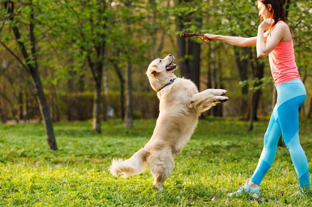 Как отучить собаку прыгать на людей от радости при встрече
