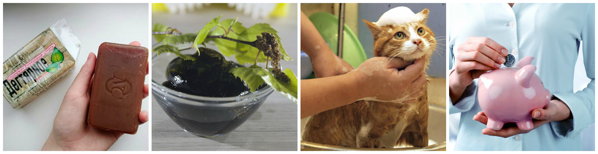 Как быстро и эффективно избавить кошку от блох с помощью народных методов