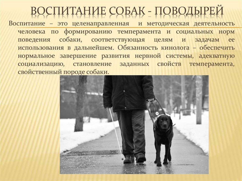 Всё о воспитаниисобак