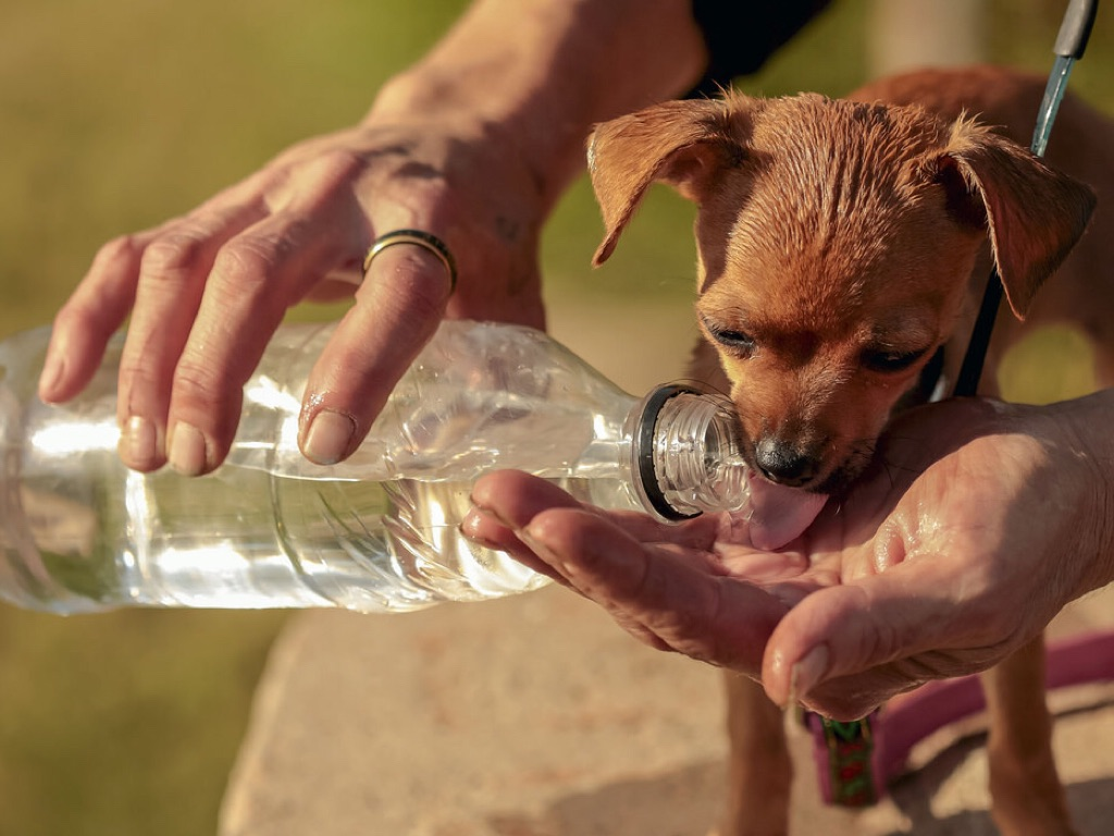 Собака много пьет воды и много мочится: причина