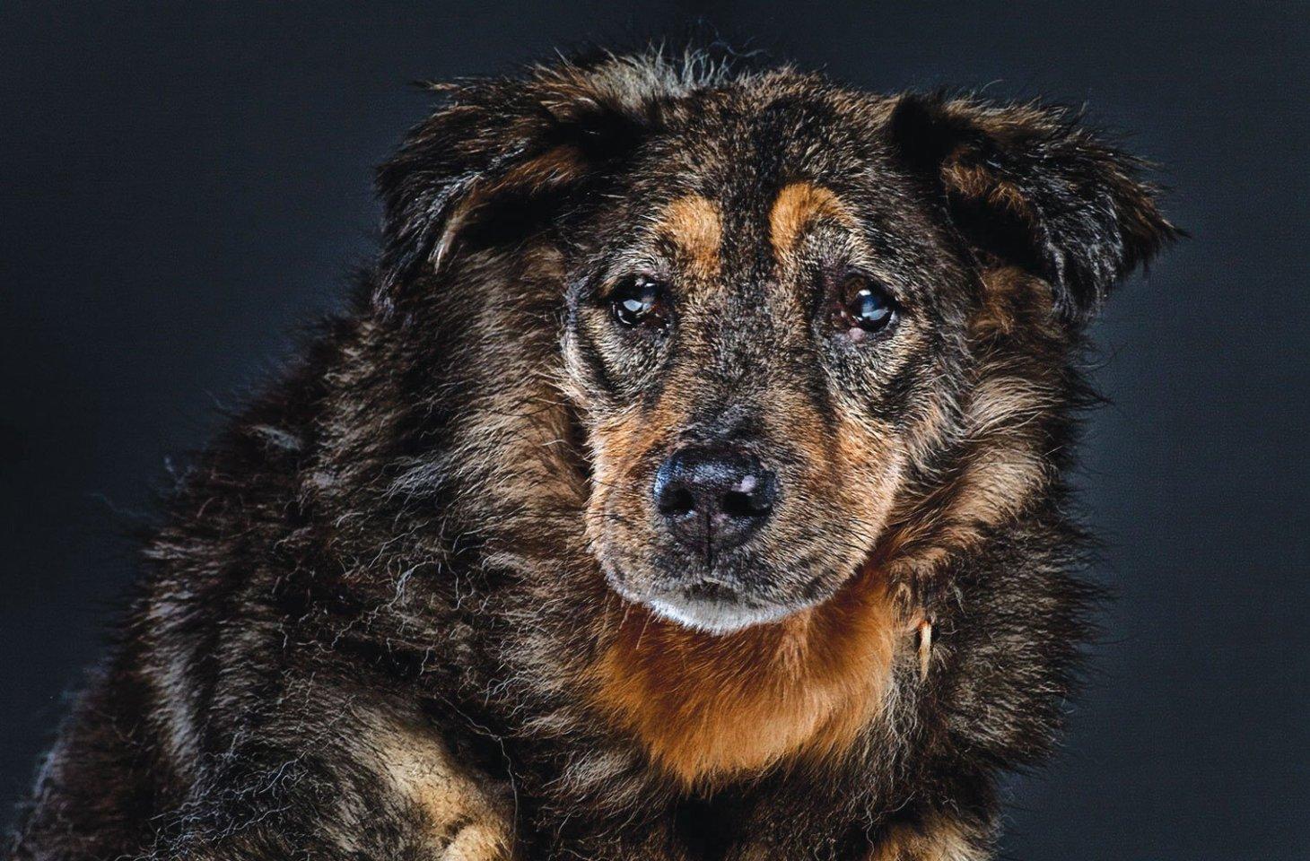 Собаки-долгожители: представители каких пород живут дольше всех