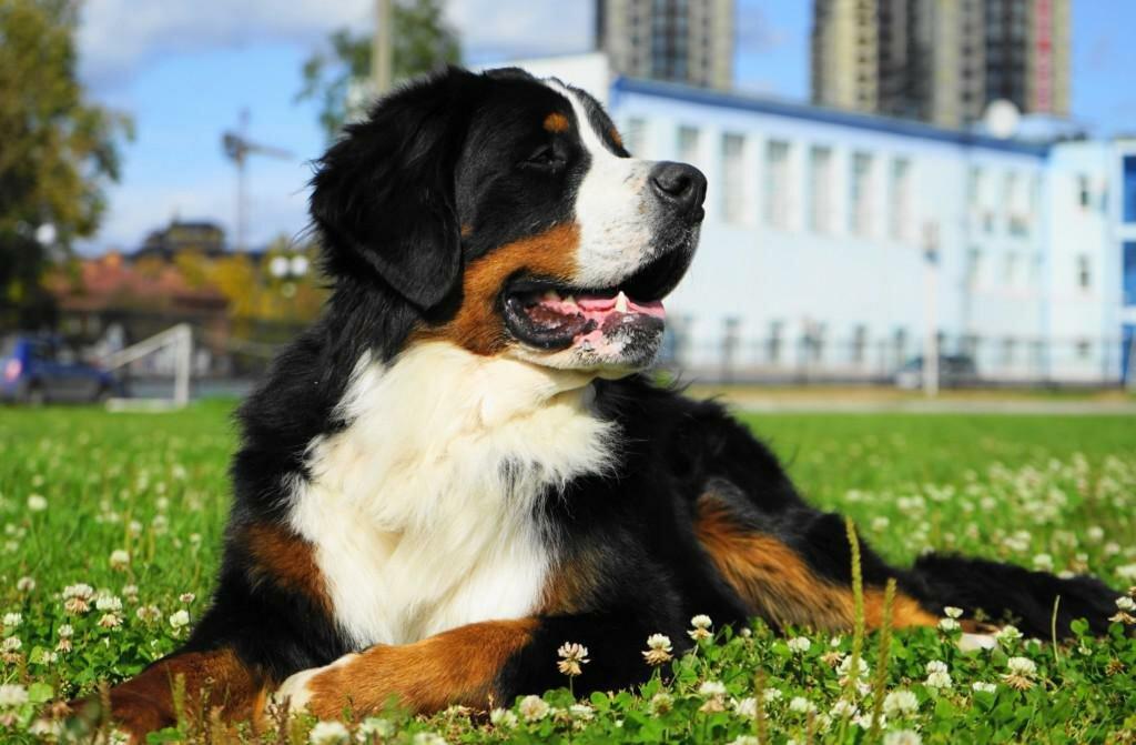 Самые добрые породы собак в мире