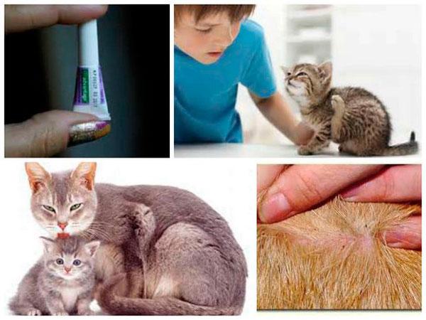 С какого возраста можно обрабатывать котят от блох