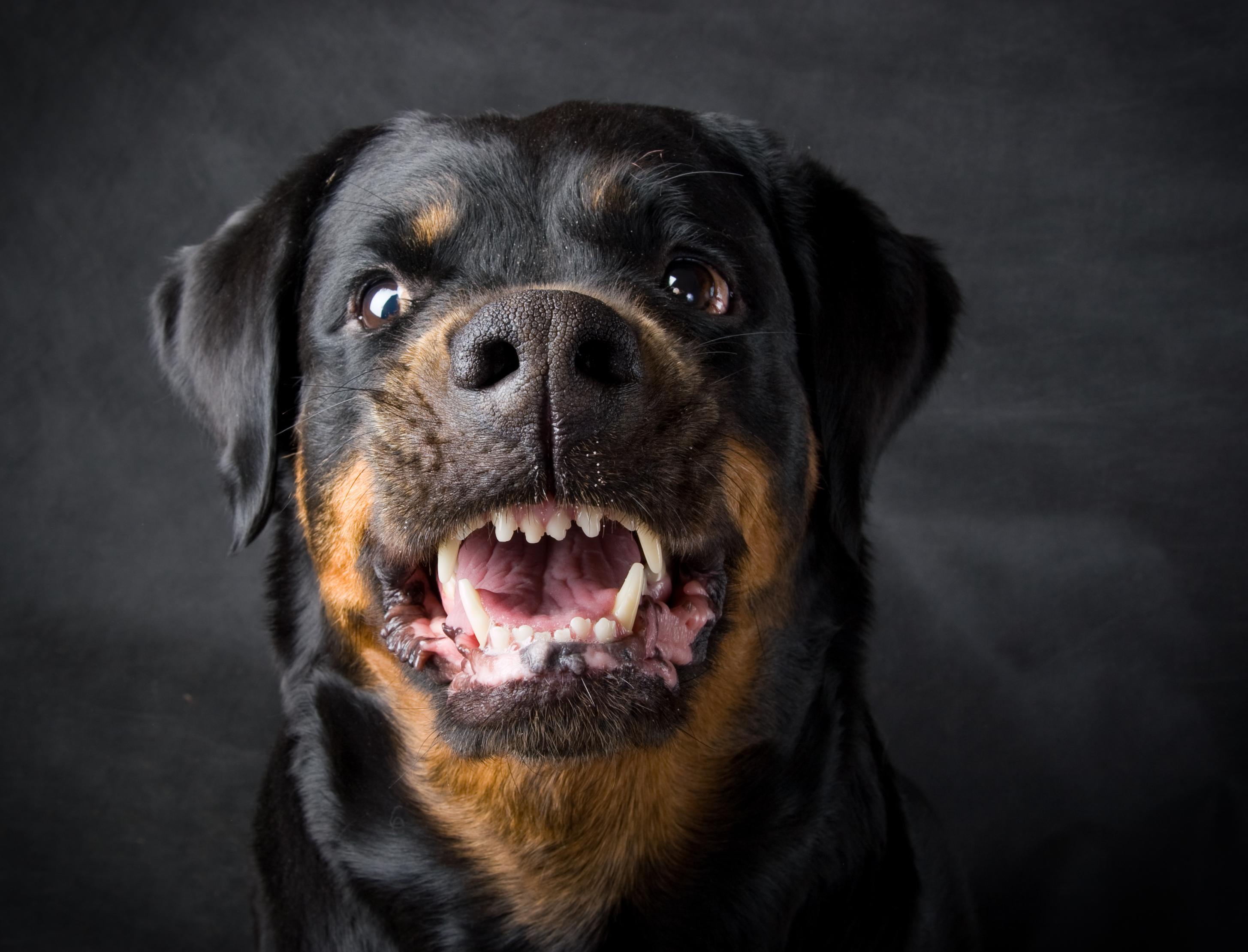 Лучше не злить: Топ-6 пород собак способных перекусить кости