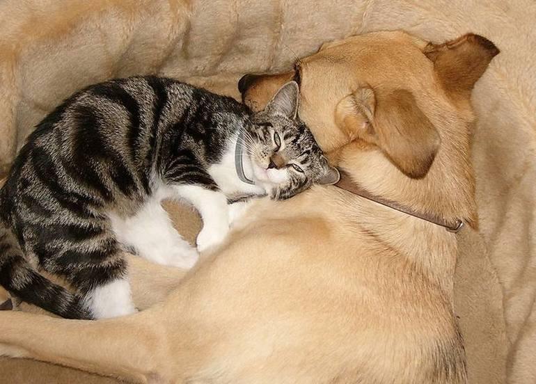 Как подружить кошек между собой в квартире: примеры как можно помирить