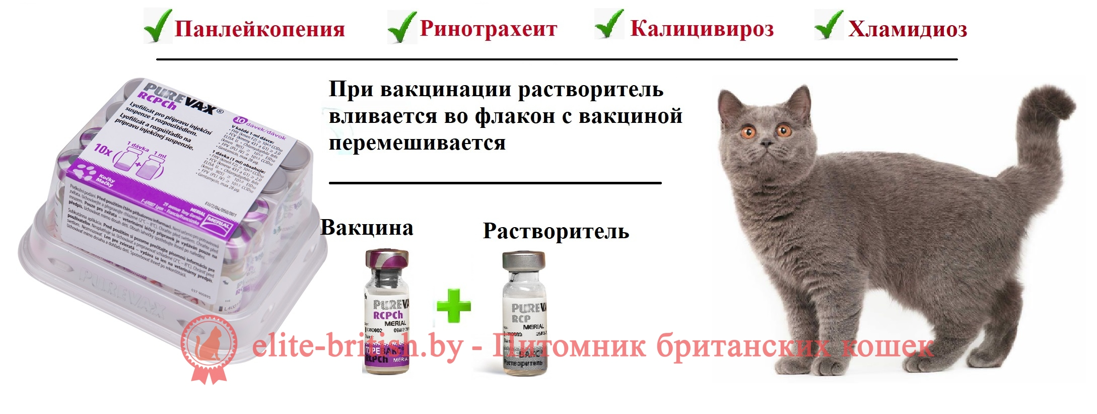 Вакцинация кошек: как правильно прививать питомца