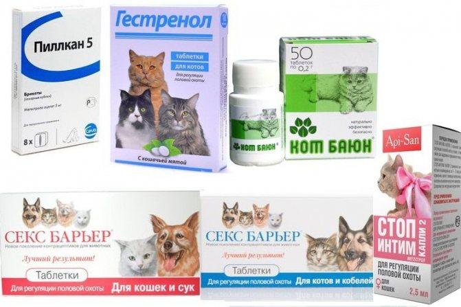 Кошка просит кота: варианты как успокоить в домашних условиях