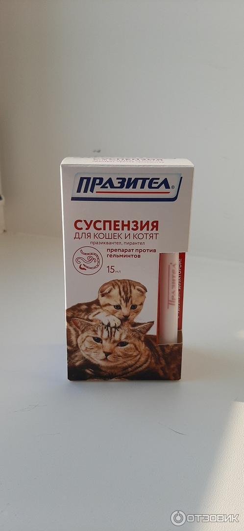 Празител для кошек и котят: инструкция