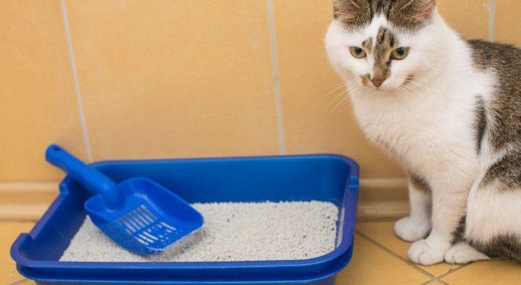 Как приучить котенка к лотку: варианты за 1 день и выбор наполнителя