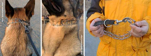 Строгий ошейник для собак: как пользоваться