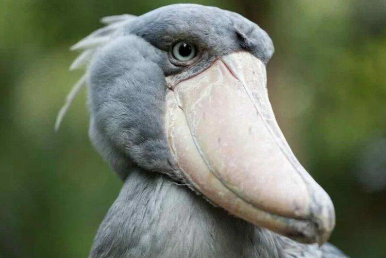 20 животных, которых природа слепила из того, что было