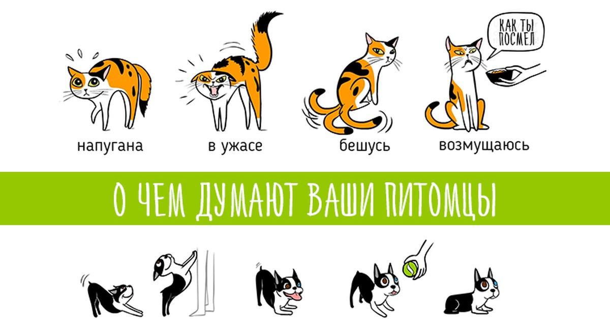 Как кошки и коты используют язык тела для общения?