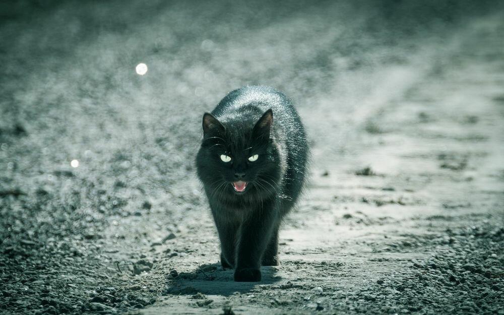 Откуда пошли все суеверия про черных котов и правдивы ли они